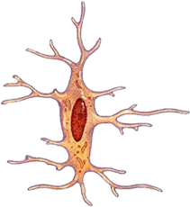 Body Cell Types | Free Online Game