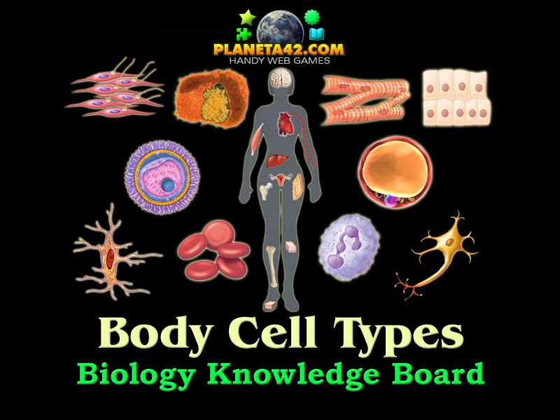 Body Cell Types | Biology Learning Game