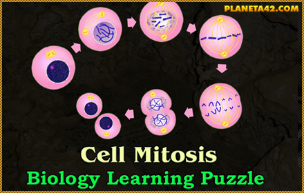 Cell Mitosis Puzzle