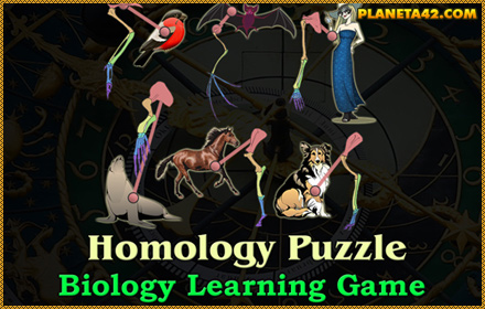 Homology Puzzle