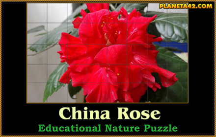 Chinese Rose Puzzle