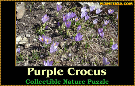 Purple Crocus Puzzle
