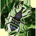 Snout Beetles