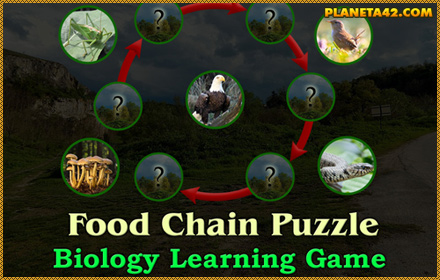 Food Chain Puzzle